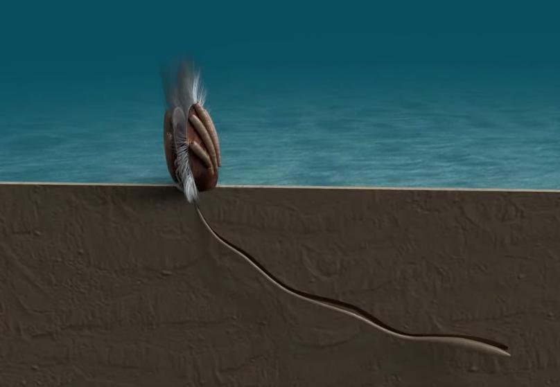 Древнейшее доказательство паразитизма насчитывает более 500 миллионов лет!