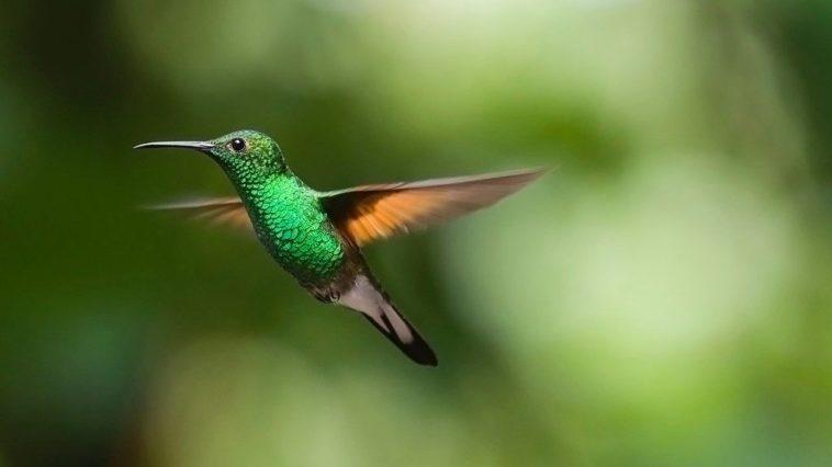 Колибри воспринимают цвета, которые мы даже не можем себе представить