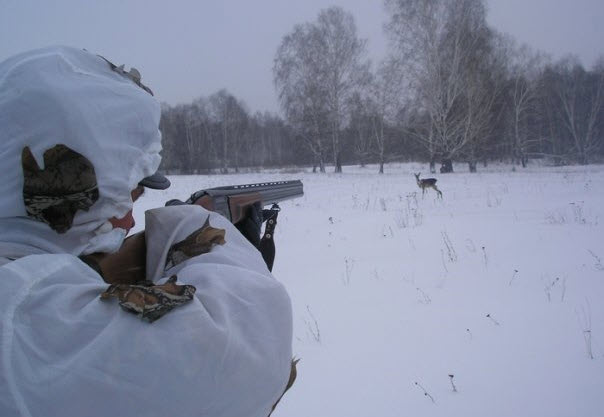 Омского егеря осудят за случайное убийство лосихи, которое он скрыл #Новости #Общество #Омск