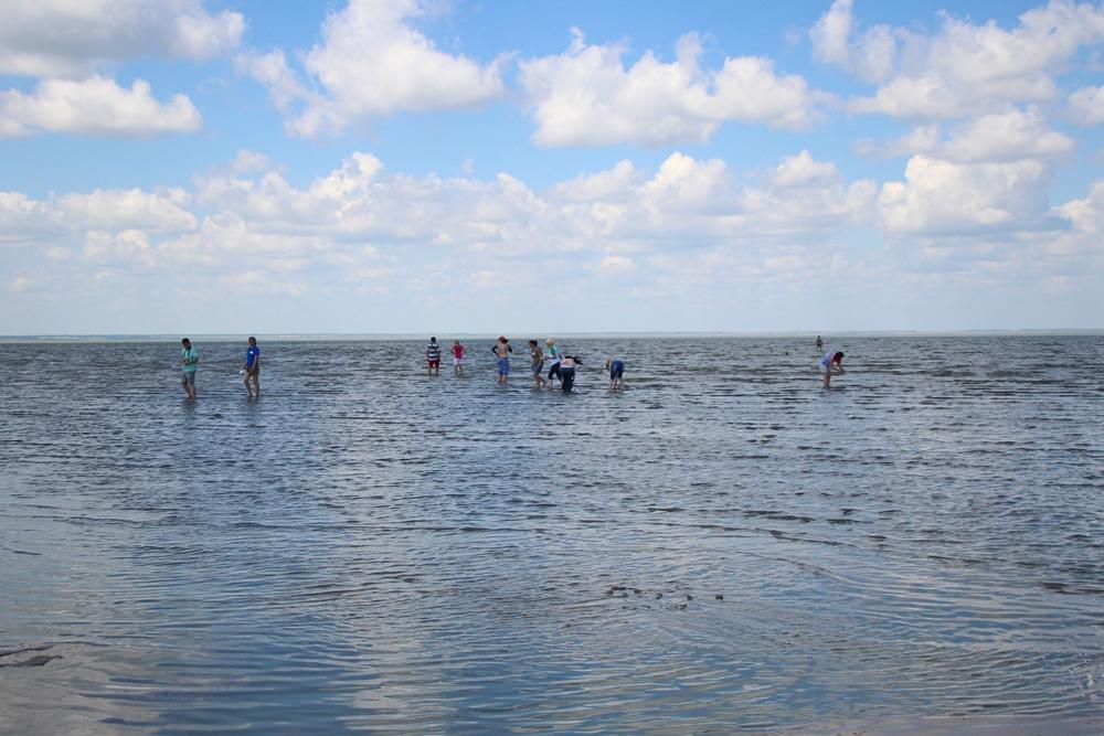 Омичам предлагают бесплатно поехать на озера #Новости #Общество #Омск