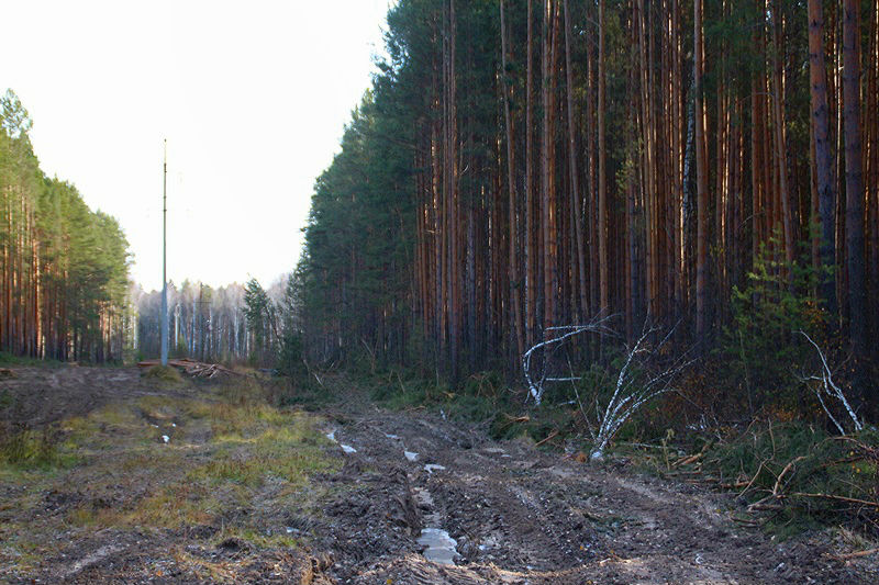 Лесоруб оставил без света два района Омской области #Новости #Общество #Омск