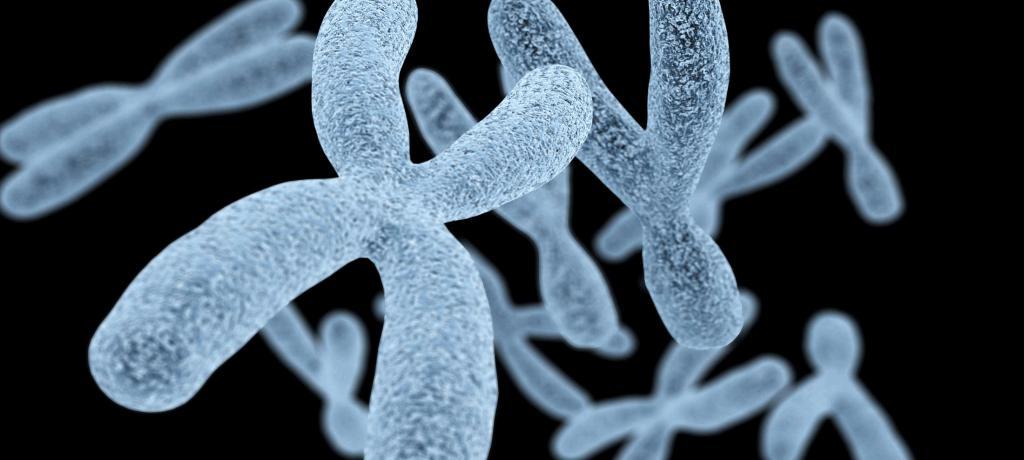 Вот и все, Х-хромосома была полностью секвенирована!