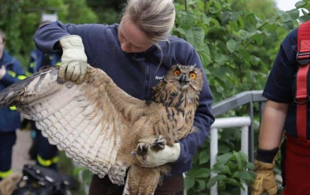 В Германии два десятка человек спасали сову