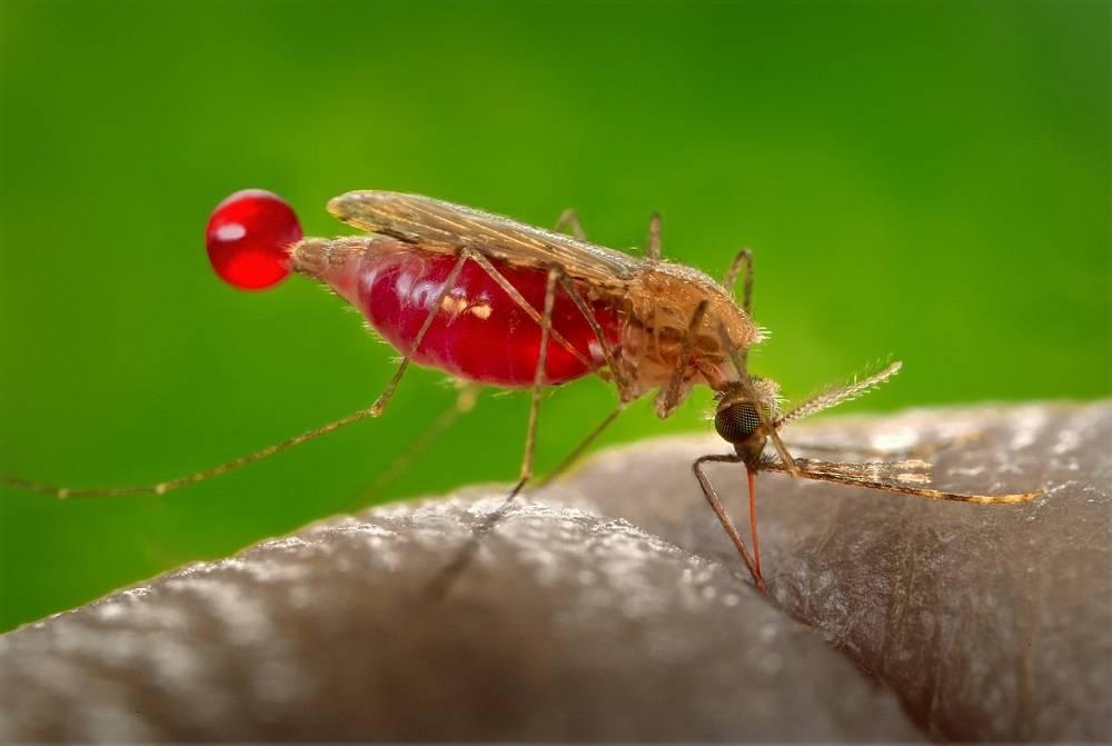 Омич, работавший в Африке, умер от укуса малярийного комара #Новости #Общество #Омск
