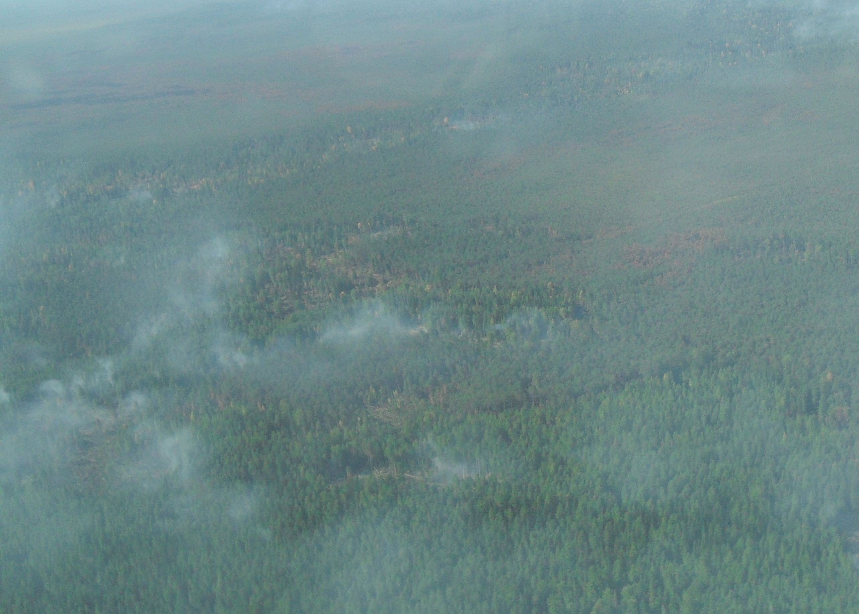 На севере Омской области уже две недели не могут потушить лесной пожар #Омск #Общество #Сегодня