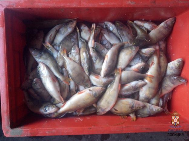 Омские рыбаки незаконно поймали центнер окуня #Омск #Общество #Сегодня