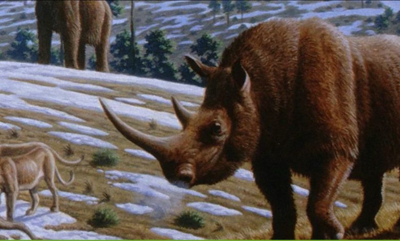 Шерстистые носороги исчезли не из-за человека