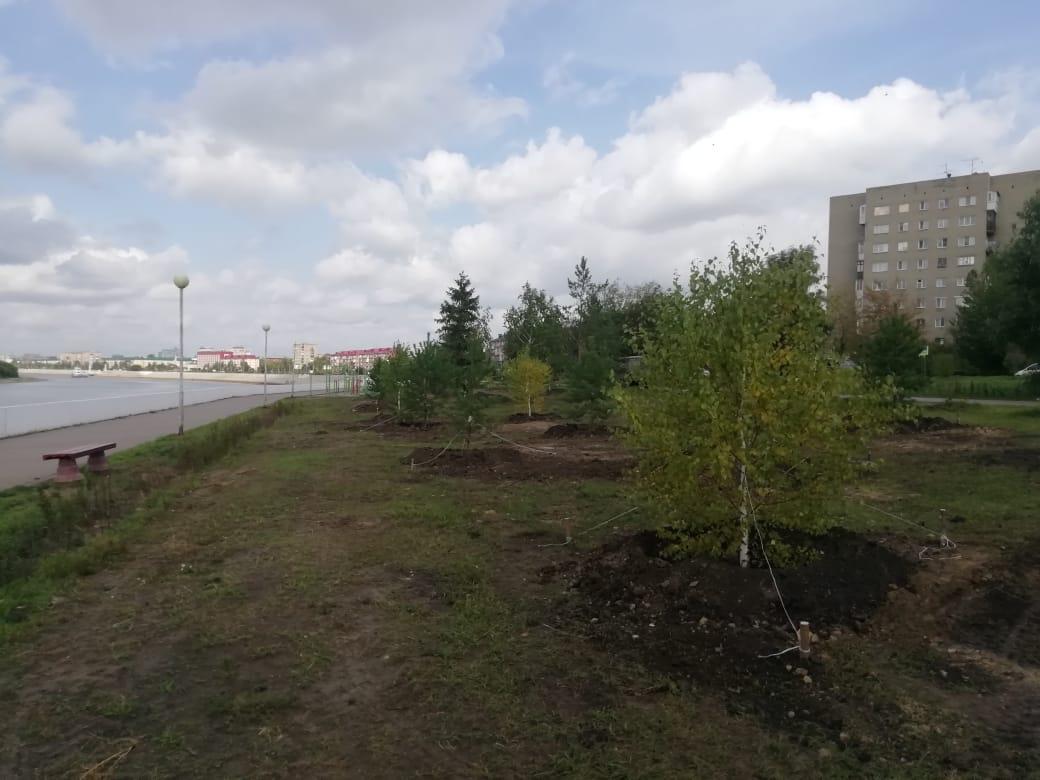 На Иртышской набережной в Омске высадили еще 75 деревьев #Новости #Общество #Омск