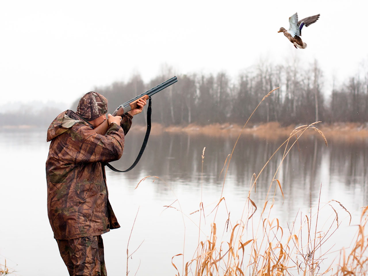 В Омской области разрешили охоту на пернатых, несмотря на птичий грипп #Омск #Общество #Сегодня
