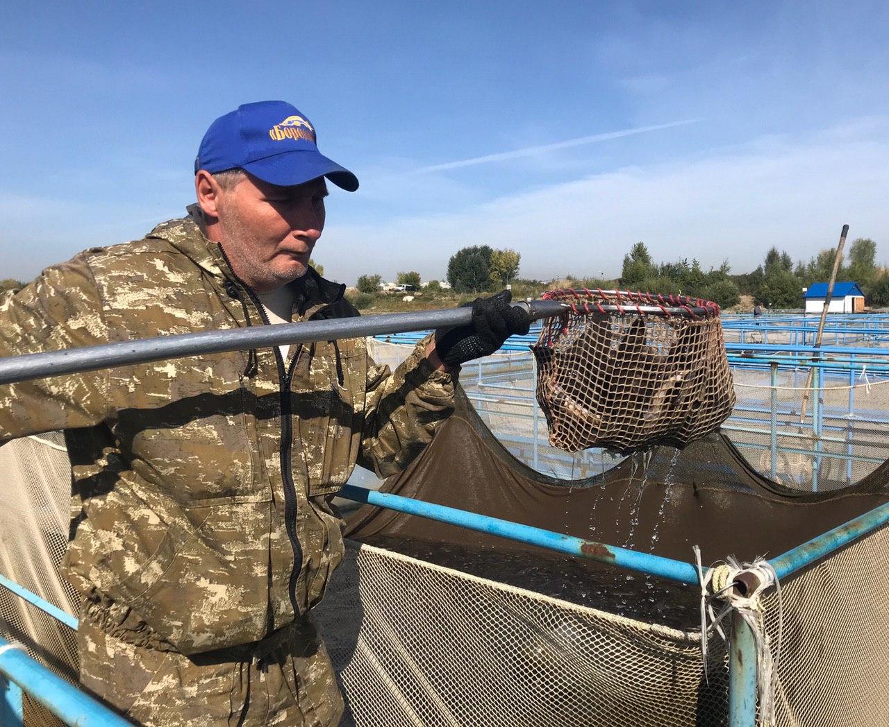 В Иртыш выпустили более 1000 мальков краснокнижного осетра #Омск #Общество #Сегодня