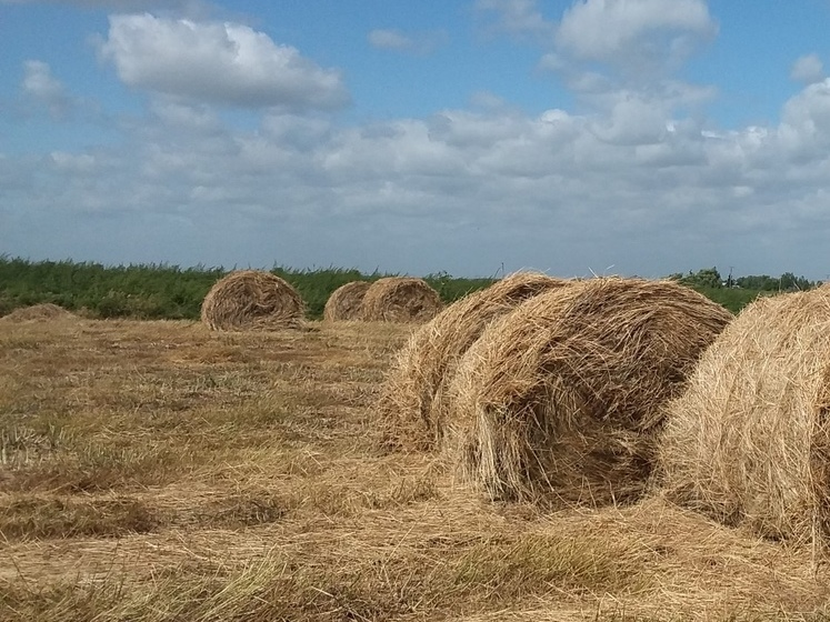 Омич поджег 10 тонн соседского сена и ускакал на лошади в лес #Омск #Общество #Сегодня