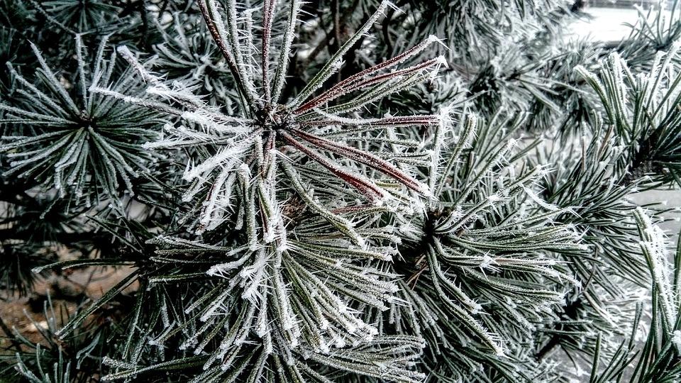 В Омске устроили погоню за похитителем новогодней елки #Новости #Общество #Омск