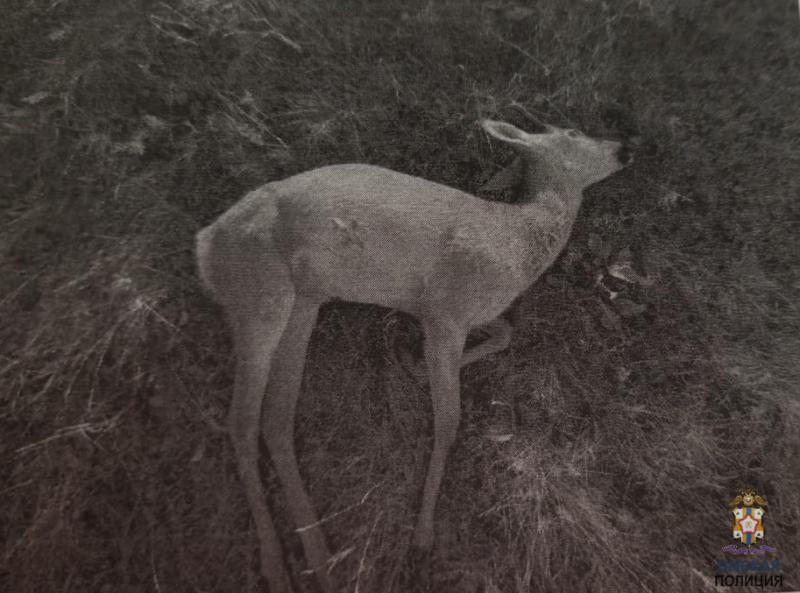 Пятеро омских браконьеров заплатили 200 тысяч за убийство косуль #Новости #Общество #Омск
