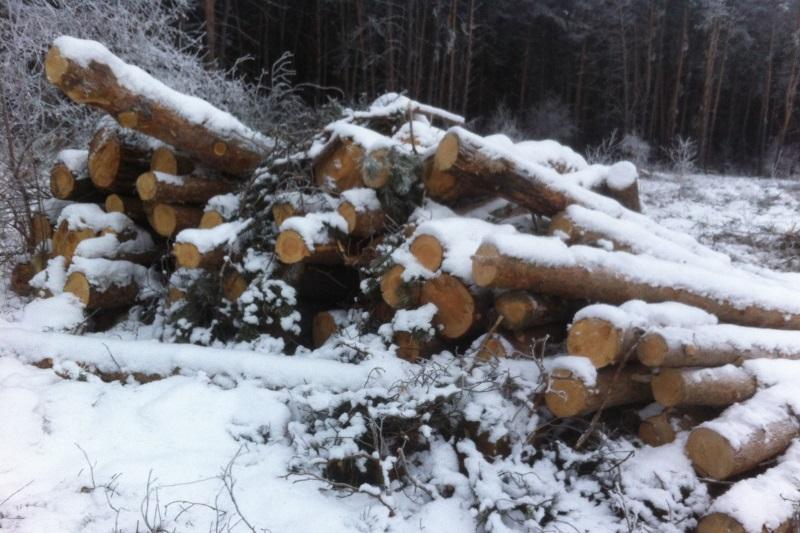 В Омской области будут судить подельников, незаконно спиливших около 200 деревьев #Омск #Общество #Сегодня