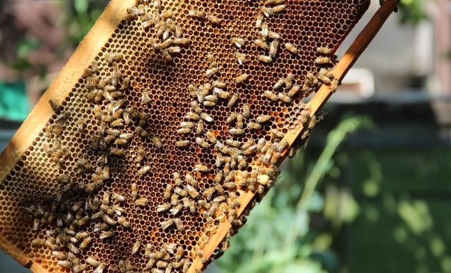 Аферист из Воронежа оставил омских пчел без медоноса #Новости #Общество #Омск