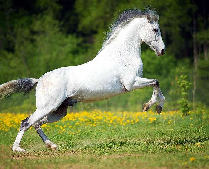 Омичей зовут поработать объездчиками лошадей #Новости #Общество #Омск