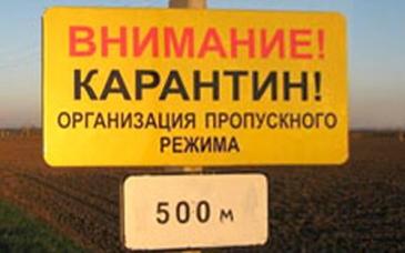 В Омской области обнаружили четвертый очаг бешенства за неделю #Омск #Общество #Сегодня