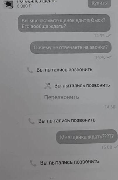 Омичка пыталась купить породистую собаку по дешевке и осталась с носом #Омск #Общество #Сегодня
