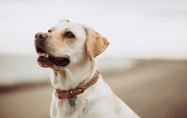 В Польше коронавирус будут выявлять при помощи собак