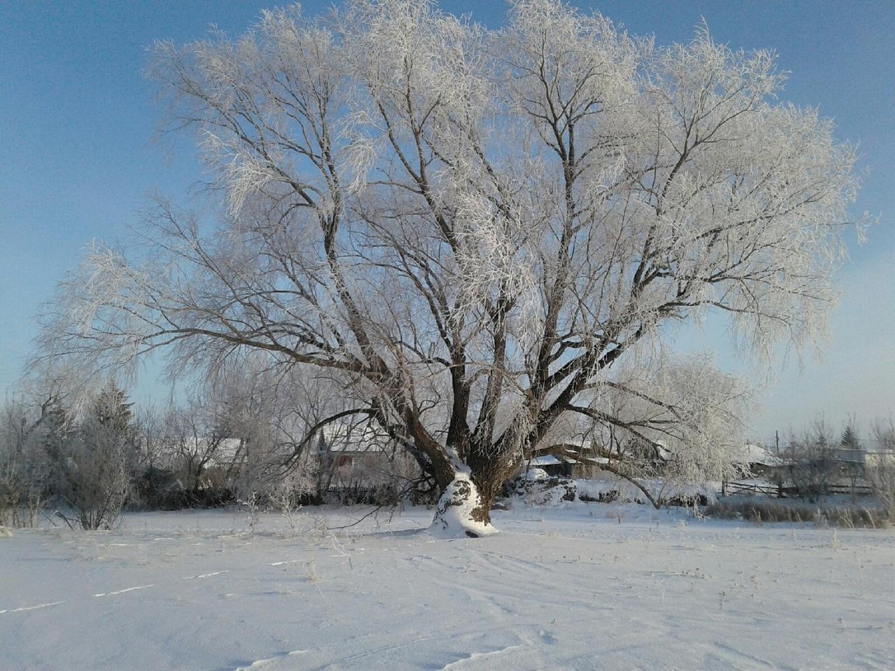 Омская область попала под «колпак» антициклона: будет холодно, но солнечно #Омск #Общество #Сегодня