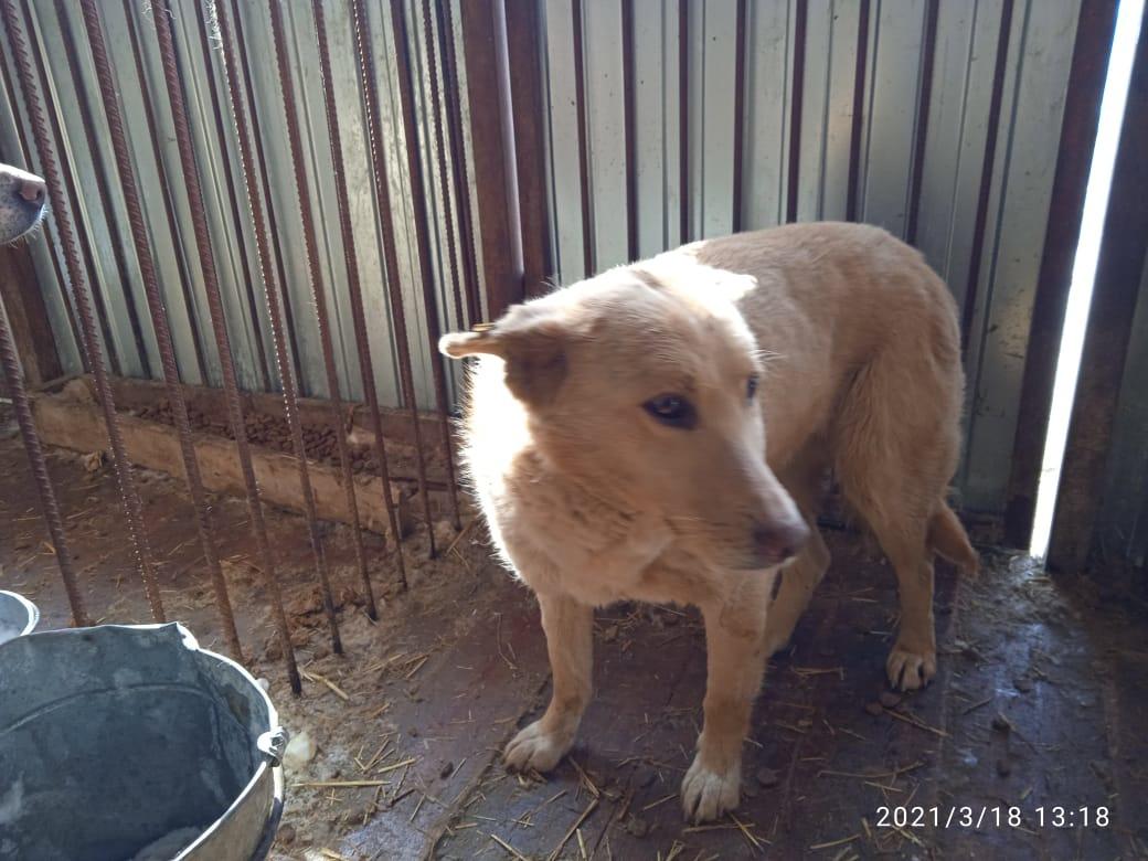 Мэрия заявила, что собаку не убивали на глазах омских детей #Новости #Общество #Омск