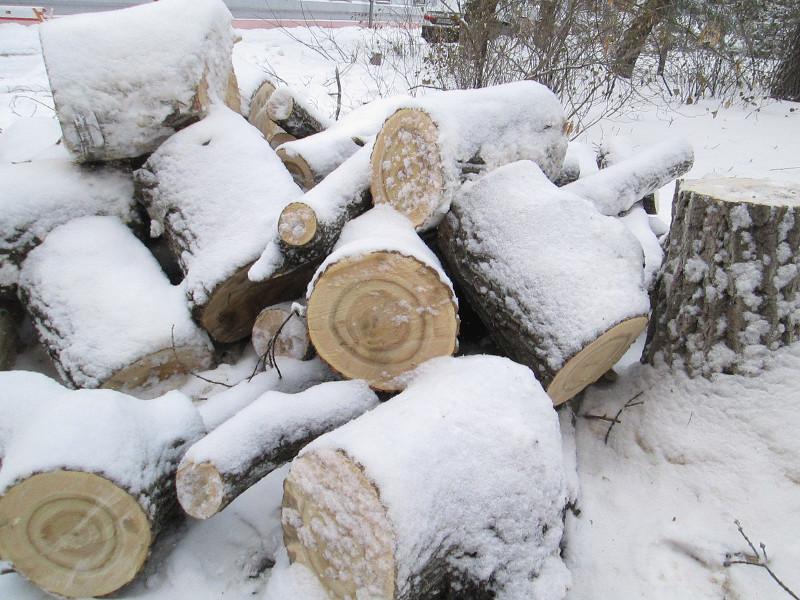 На севере Омской области на главу КФХ упало дерево и убило его #Новости #Общество #Омск