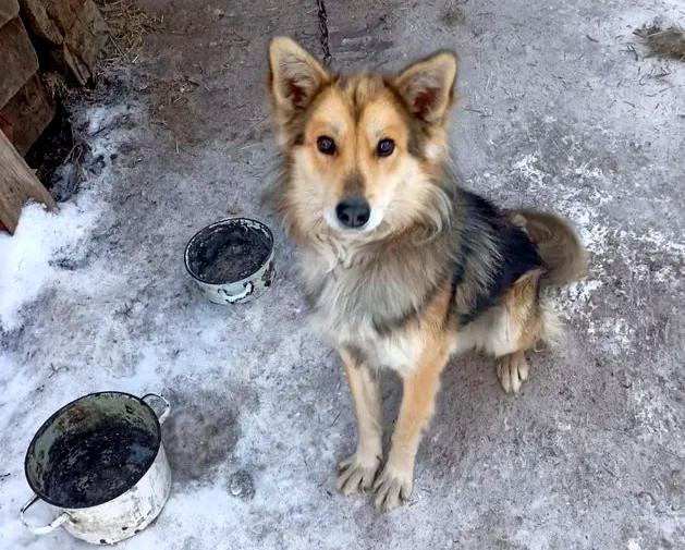 Агрессивные собаки затерроризировали целый город в Омской области #Омск #Общество #Сегодня
