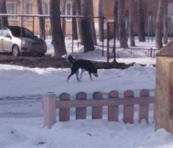 В Омске бродячая собака укусила двух детей: началась проверка #Новости #Общество #Омск