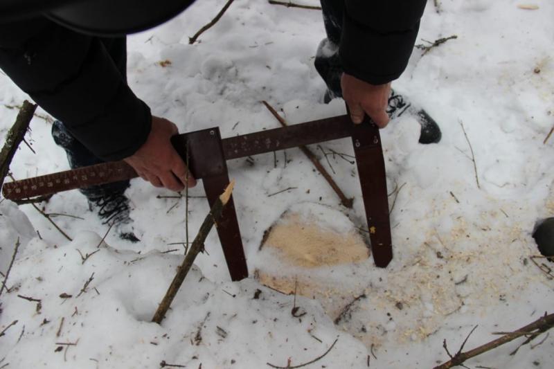 На севере Омской области поймали матерого «черного лесоруба» #Омск #Общество #Сегодня