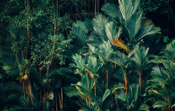 Тропические леса будут восстанавливать, используя кофе