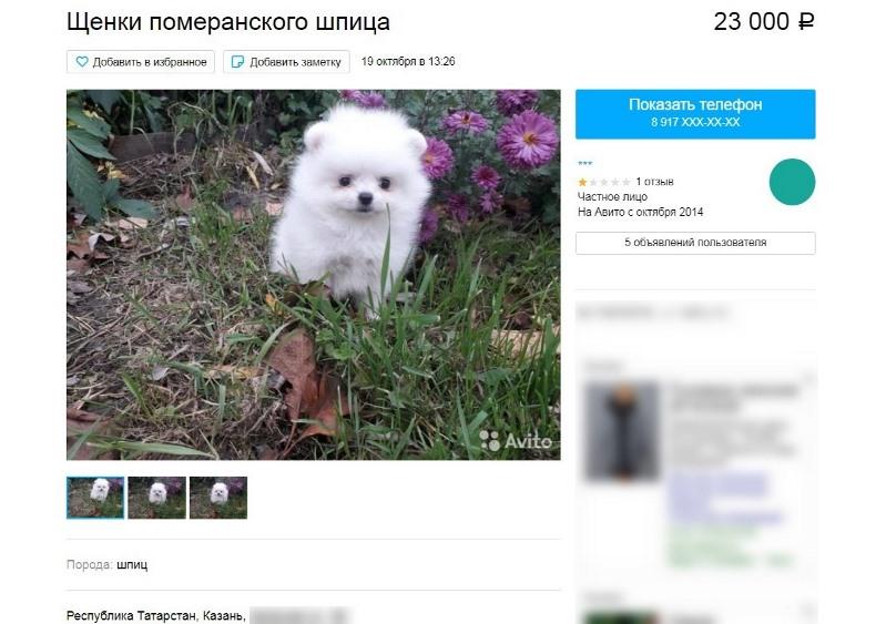 Мошенница, продавшая омичке несуществующую собаку, избежала тюрьмы #Новости #Общество #Омск