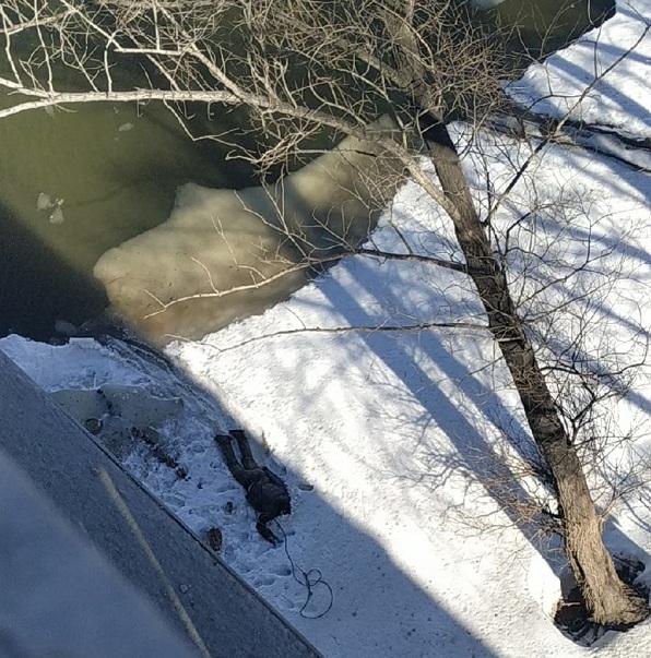 В центре Омска из реки выловили труп парня без головы #Омск #Общество #Сегодня