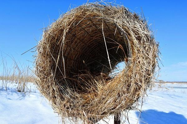 В Омской области птицам делают искусственные гнезда #Омск #Общество #Сегодня