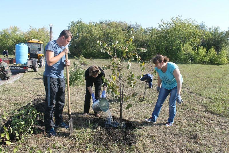 В Омской области высадят 65 тысяч новых деревьев #Омск #Общество #Сегодня