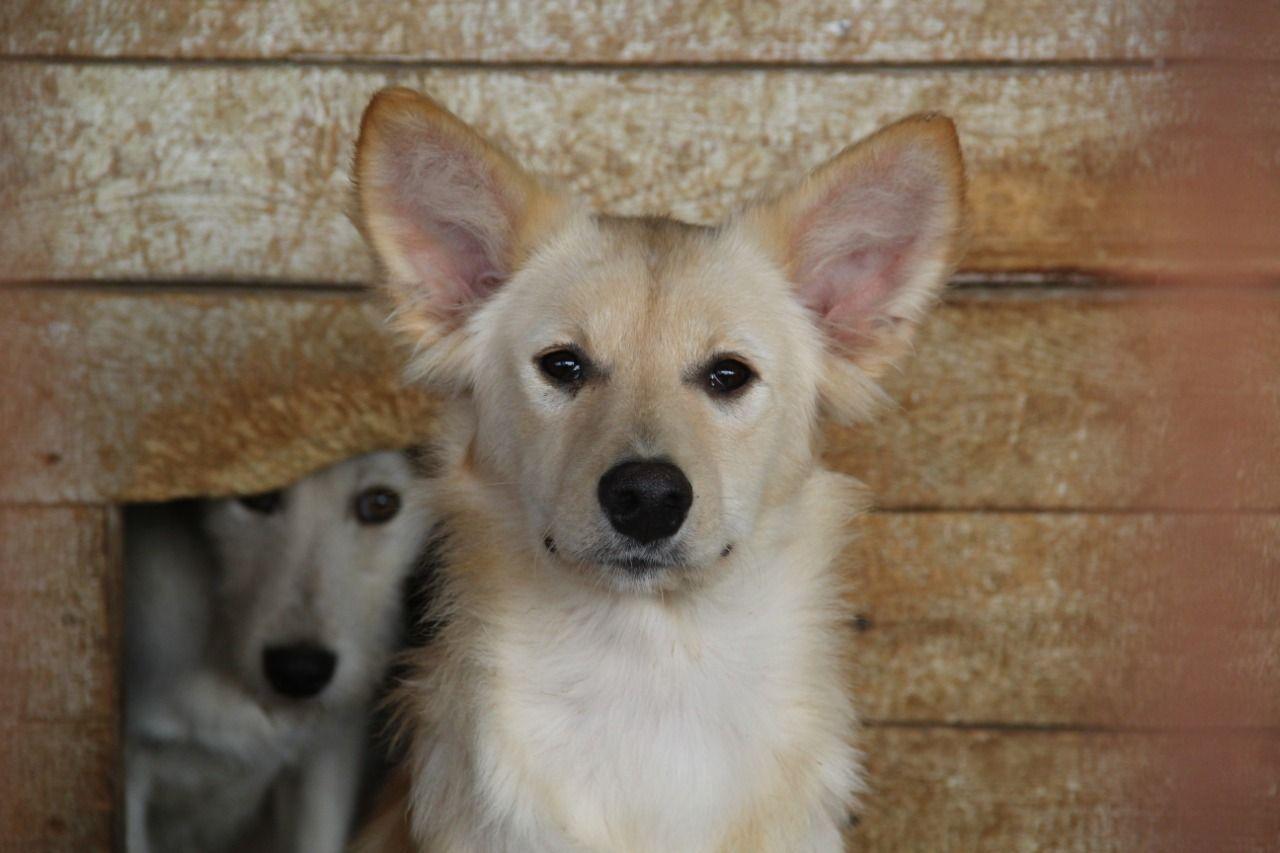 Жительница Омской области требует от соседа выселить из квартиры 5 собак #Новости #Общество #Омск