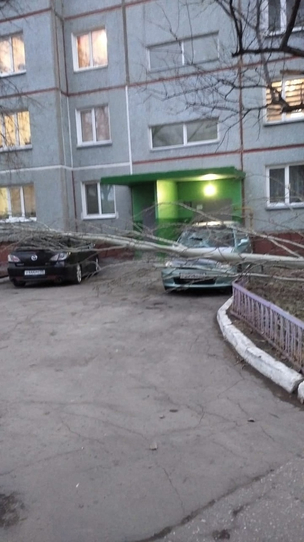 Ветер в Омске повалил дерево, которое упало на машины #Новости #Общество #Омск
