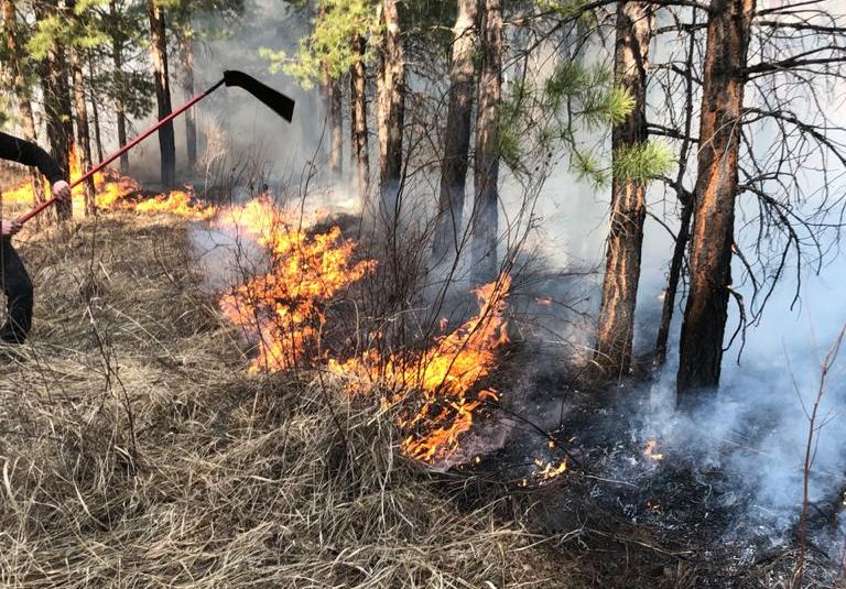 В Омской области начали гореть леса #Омск #Общество #Сегодня