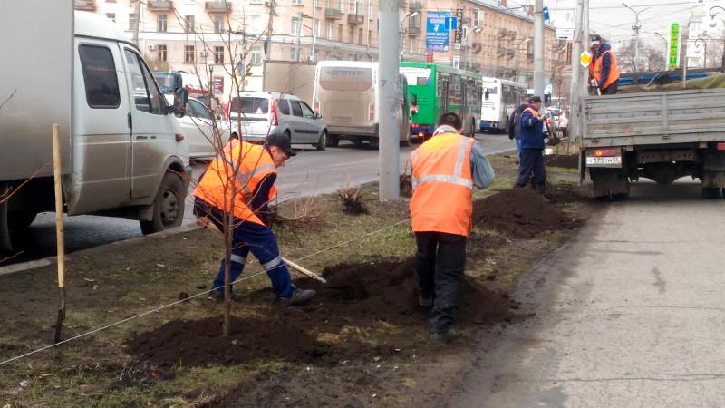 У дорог в Омске вместо заборов высадят живую изгородь #Омск #Общество #Сегодня