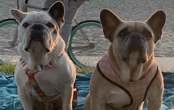 Похитителей собак Леди Гаги арестовали - СМИ