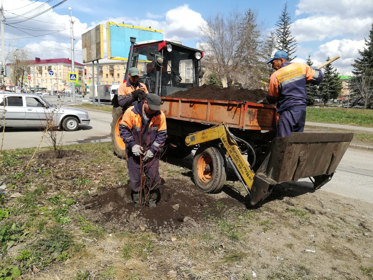 На Нефтезаводской высадили 100 саженцев липы #Новости #Общество #Омск