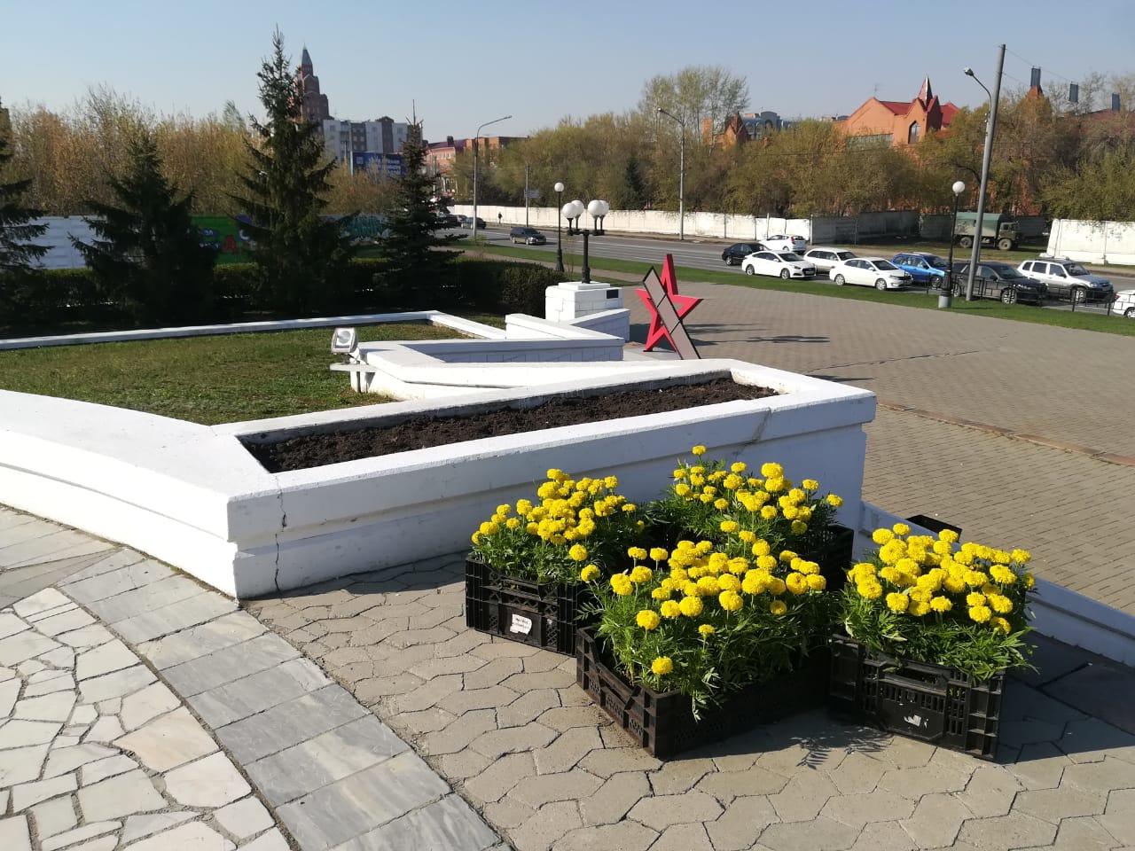 В Омске ко Дню Победы высадят почти 50 тысяч цветов #Омск #Общество #Сегодня