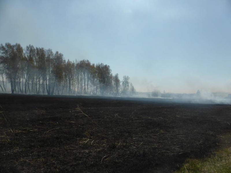 Рослесхоз рекомендует ввести в Омской области режим ЧС из-за пожаров #Омск #Общество #Сегодня