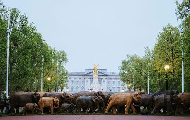 """К Букингемскому дворцу """"пригнали"""" стадо деревянных слонов"""