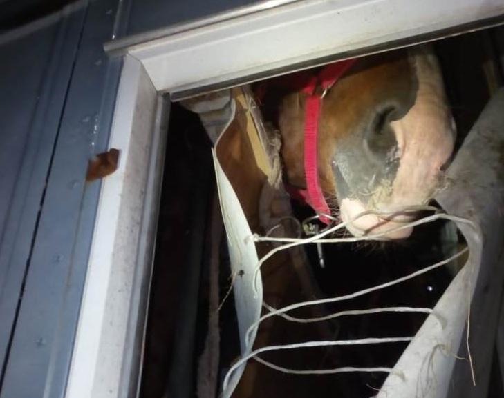 Из Омской области не выпустили лошадей, ехавших из Дагестана в Киргизию #Новости #Общество #Омск