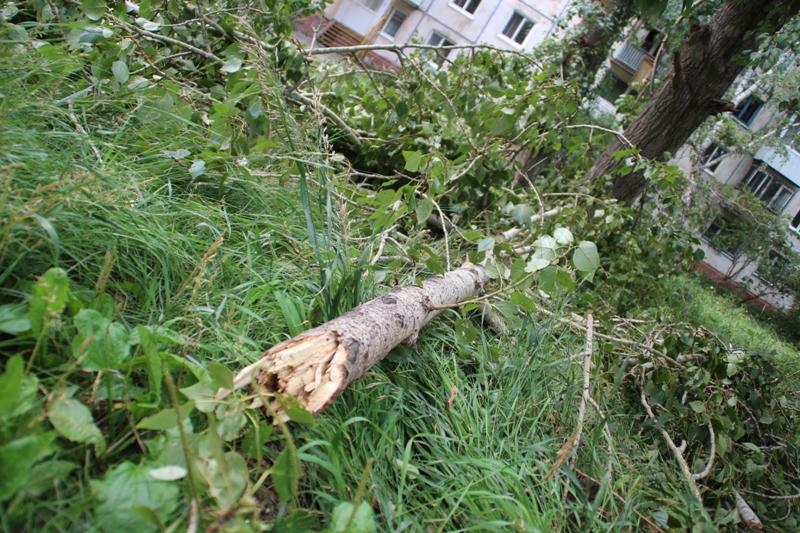 Вчерашний ураган в Омской области мог стать причиной смерти мужчины #Новости #Общество #Омск