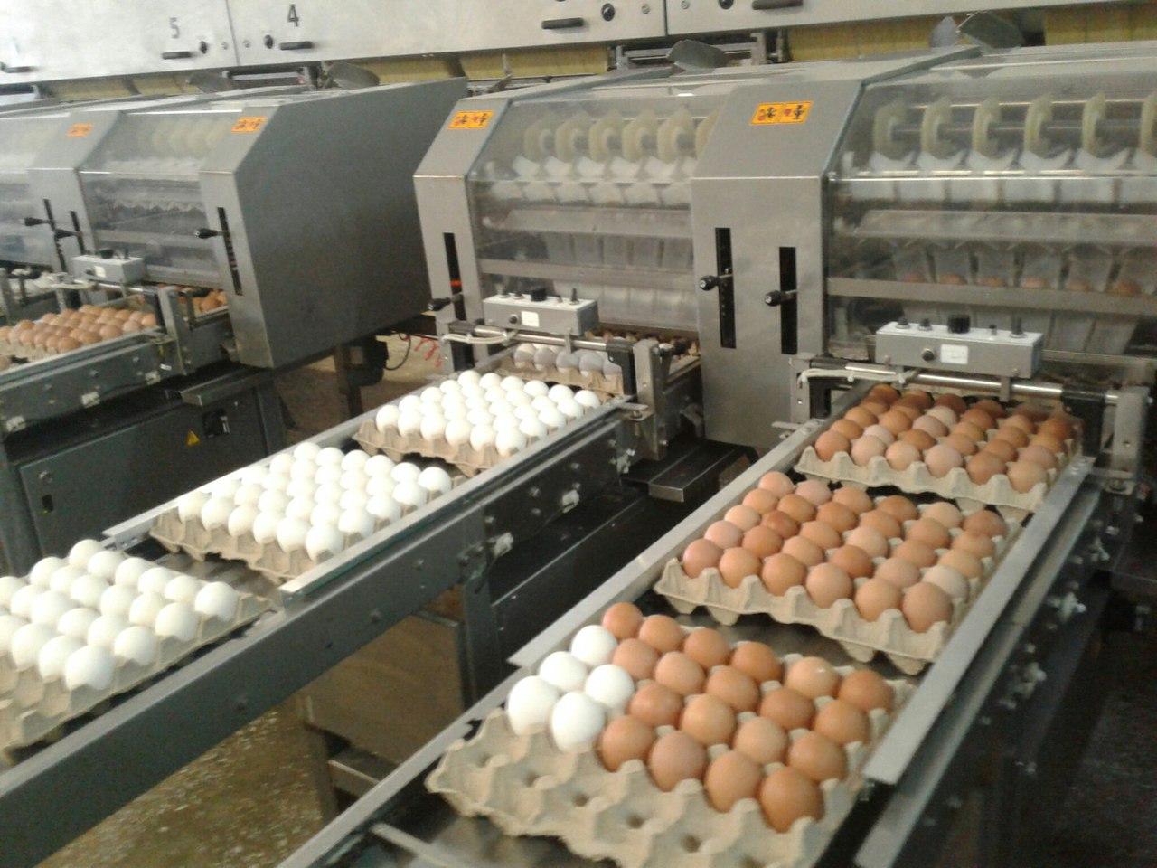Производители яиц пригрозили дефицитом