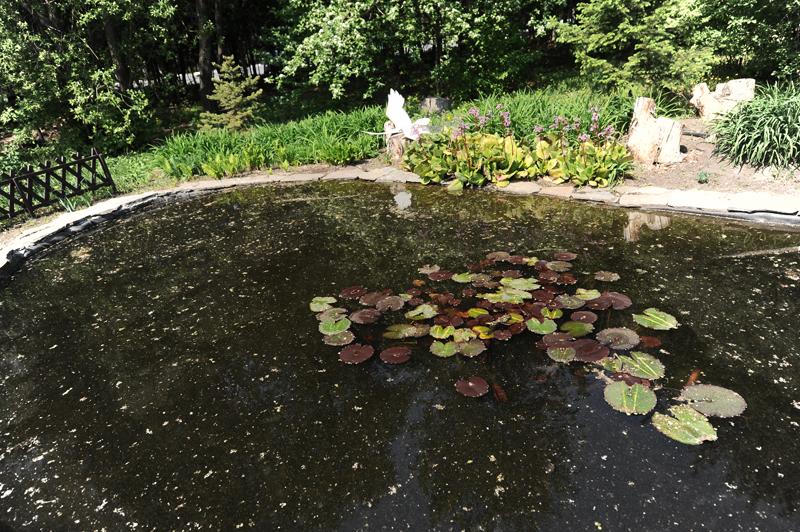 Почему обязательно нужно побывать в ботаническом саду Омского ГАУ? #Омск #Общество #Сегодня