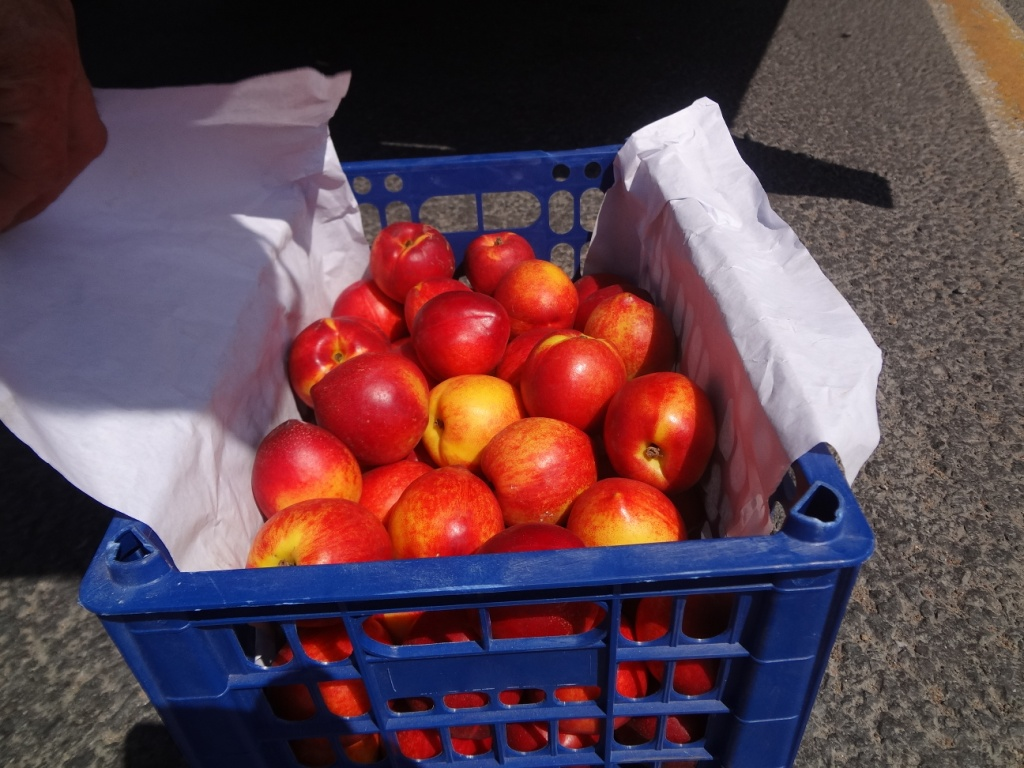 В Омскую область не пустили десятки тонн свежей черешни #Новости #Общество #Омск