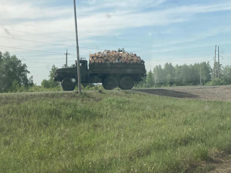 В Омской области срубили особо охраняемый лес #Омск #Общество #Сегодня