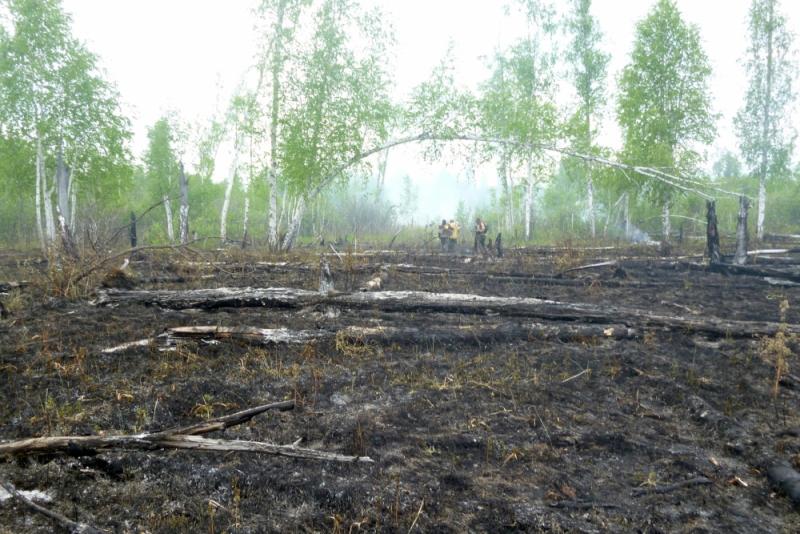 Под Омском ликвидировали два лесных пожара #Новости #Общество #Омск